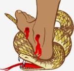 serpentcrushed